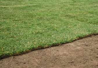 Лист газона на участке