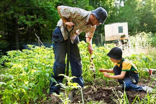 Как правильно говорить огород сажают или огород садят 50