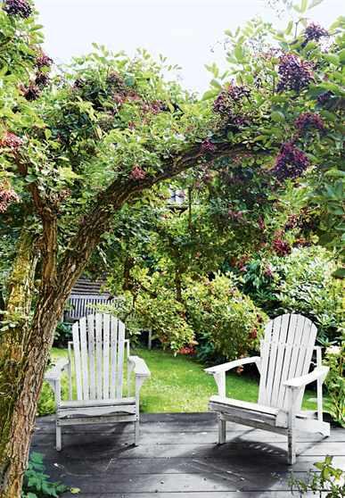 Как создать красивый фруктовый сад