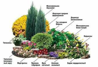Shema-cvetnika-iz-pervocetov