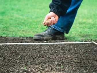 Когда сажать газонную траву в зиму 464