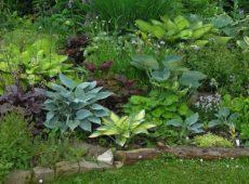 Дизайнерские идеи по использованию хост в саду