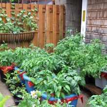 Огород в контейнере