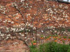 Пристенный сад