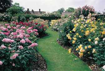 Создаем розарий в саду