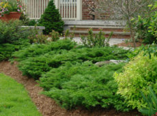 Использования можжевельника в дизайне сада