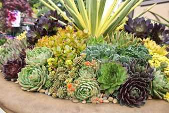 Композиции из цветов суккулентов
