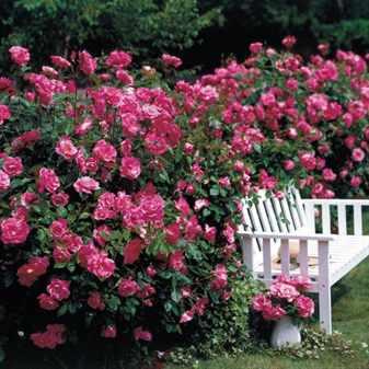 Можно ли сделать живой забор из цветов: инструкции по созданию цветущей изгороди