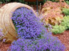 Обриета – ковры из цветов