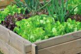 Оформление огорода в контейнерах