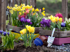 схемы клумб с тюльпанами
