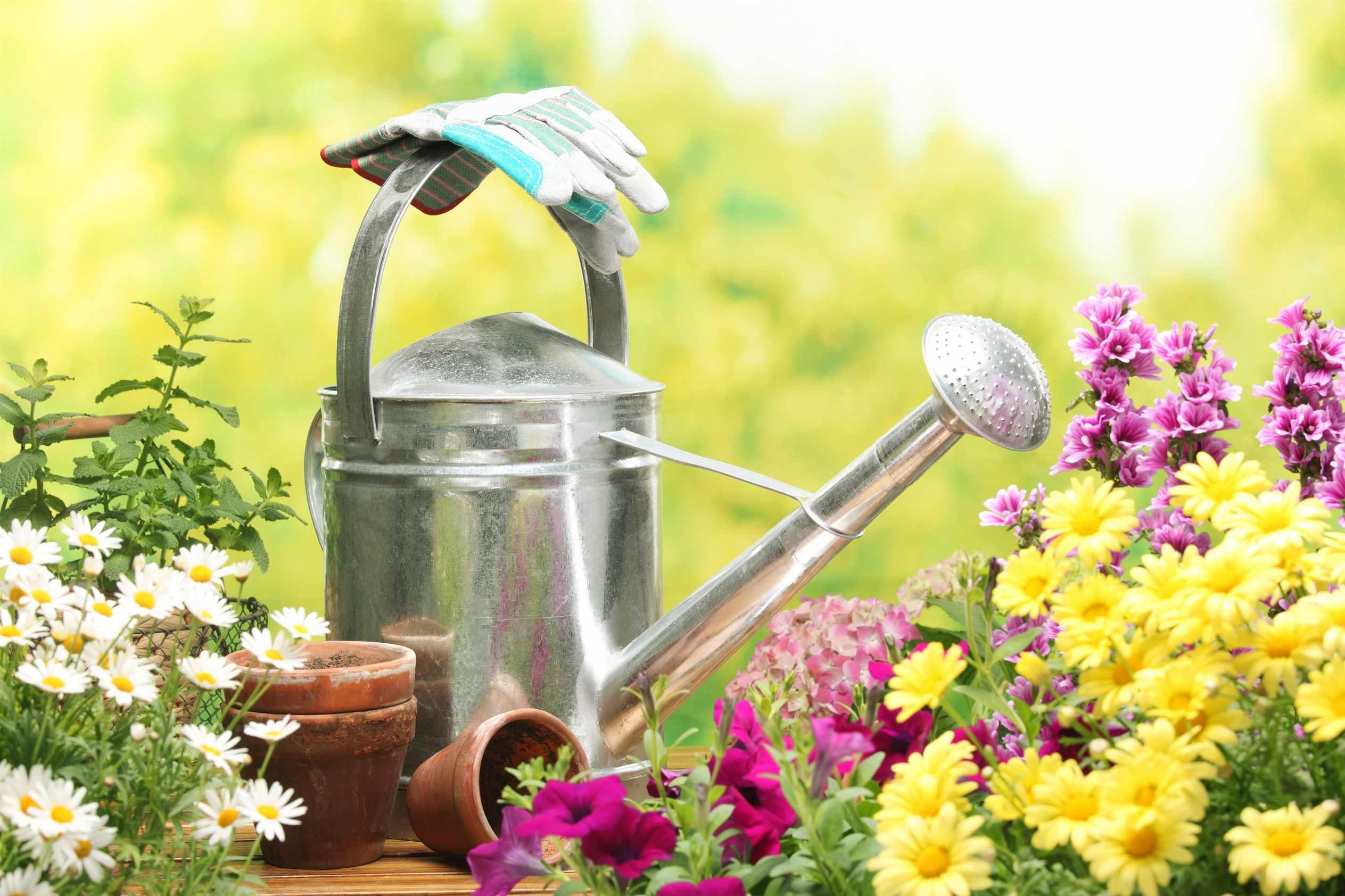 Как правильно расположить грядки на огороде или дачном участке
