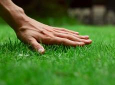 зеленый газон и деоевья