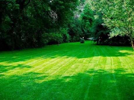 зеленый газон и деревья