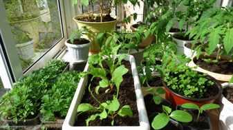 Компактный огород на балконе