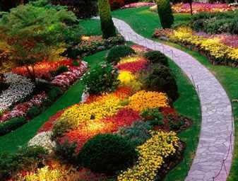 сад. цветы фото