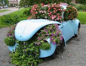Cvetushhaya-klumba-v-avtomobile
