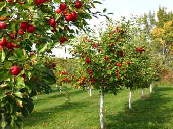 orchards-12