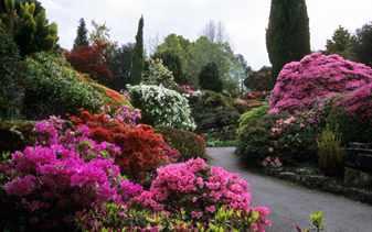 Какие цветущие кустарники посадить на участке