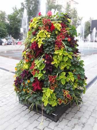 Вертикальные цветники