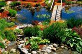 Выбираем растения для посадки в пруду