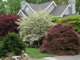 Низкорослые деревья для озеленения
