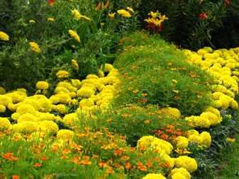 Монохромные цветники в ландшафтном дизайне