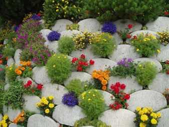 Почвопокровные цветы в ландшафтном дизайне