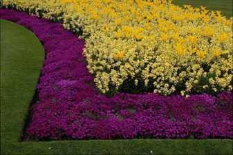 схемы клумб из первоцветов