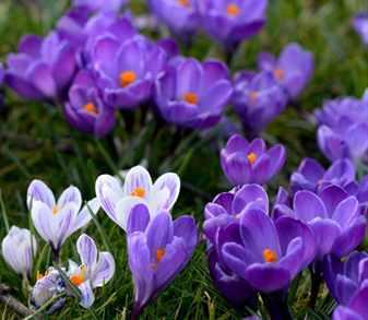 Выбираем растения для весенних цветников