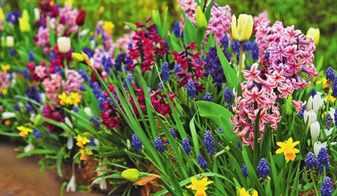 hitrosti-landshaftnogo-dizajna-vybiraem-cvety-dlya-vesennih-cvetnikov-3