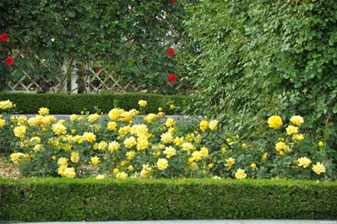Цветовое сочетание в розариях