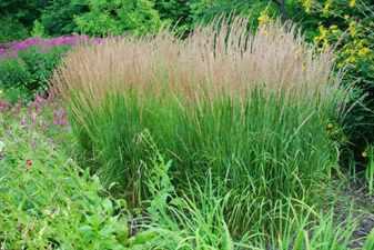 Растения для тенистых цветников