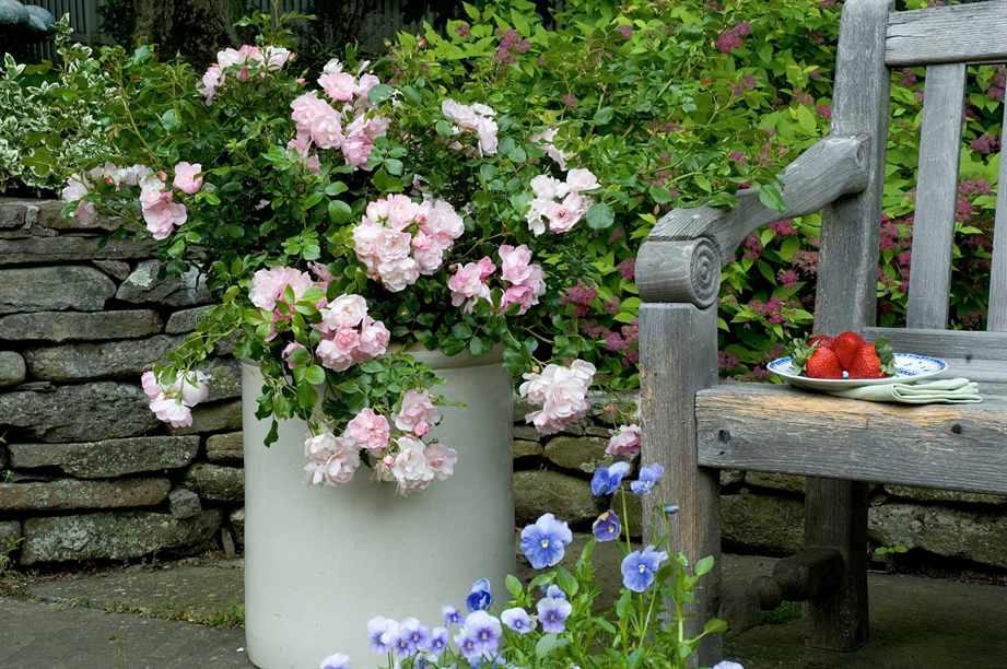 Цветовая гамма розария