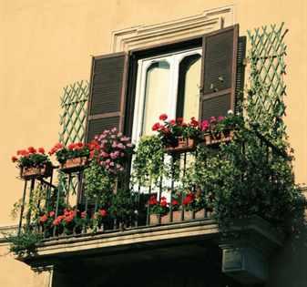 Пеларгония для украшения террасы и клумб